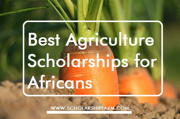 Photo of Best Agriculture Scholarship for Africans