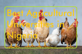 Photo of Best Agricultural Universities in Nigeria